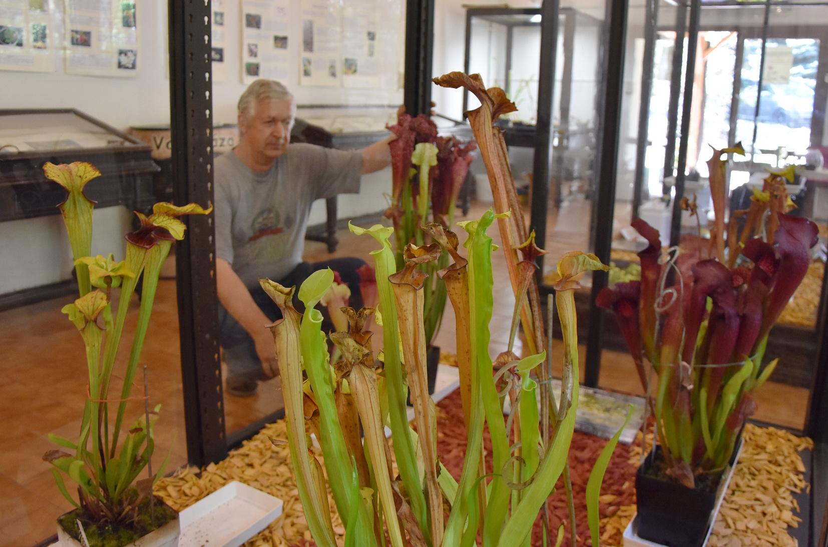 Všechny vystavené květiny pocházejí od místních pěstitelů manželů Srbových. Na snímku Ivan Srba u expozice špirlic.  Foto Josef Dušek
