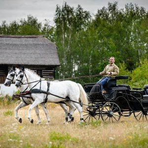 Kočár tažený párem starokladrubských koní