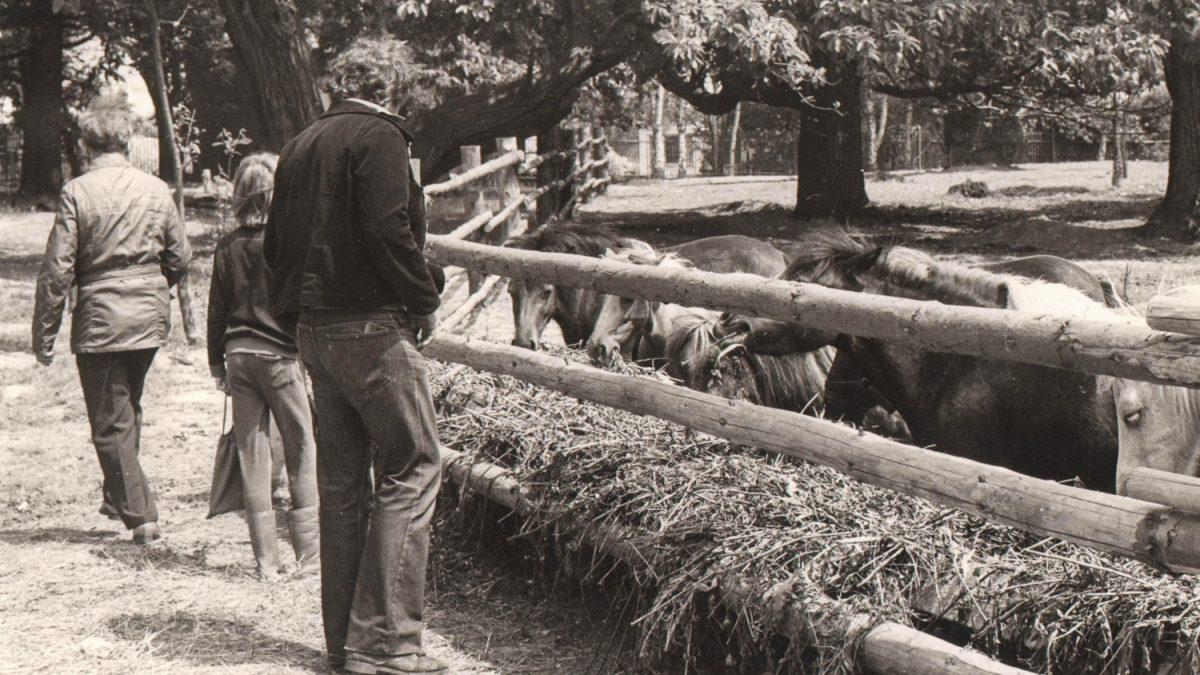 Výběh s poníky v někdejším lesoparku