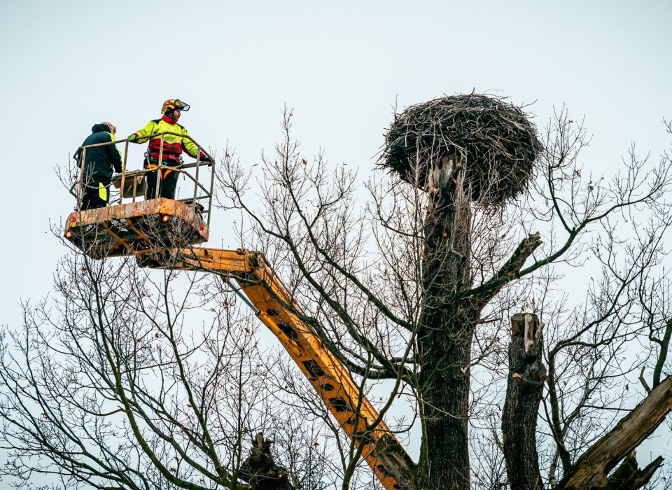 Kontrola čapího hnízda u Kamenného rybníka